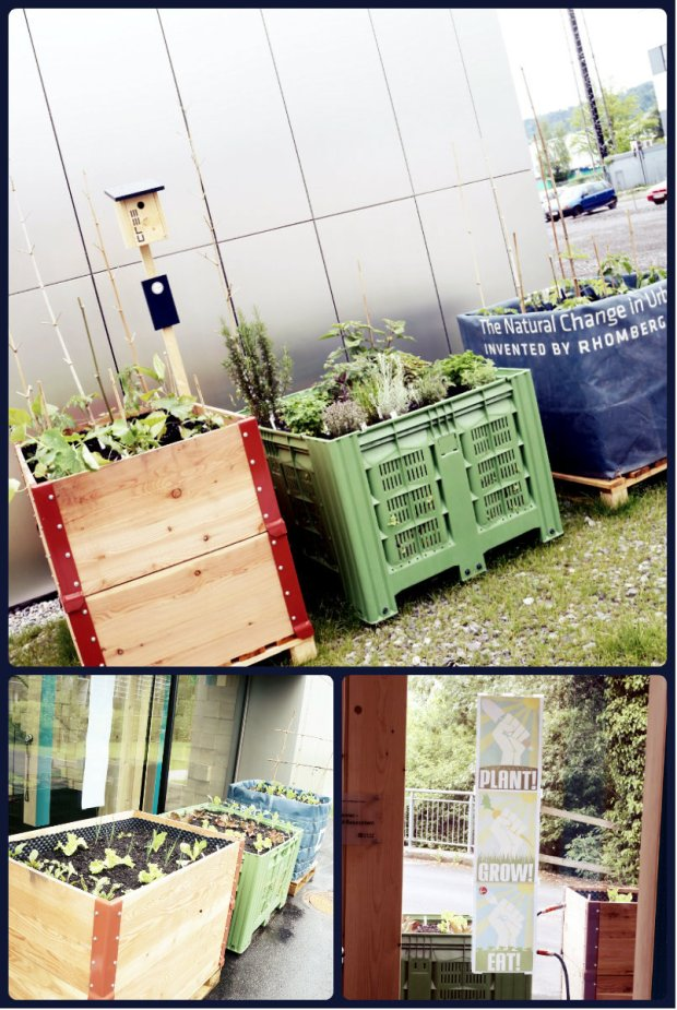 Cree Urban Farming Box